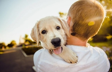 Liste over boernevenlige hunde