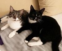 Søde katte