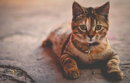Unikke facts om katte