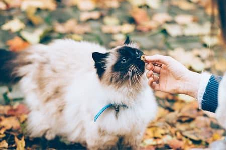 Katte elsker godbidder