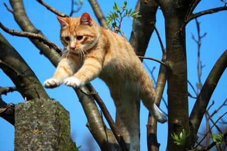 Katte er god til at springe