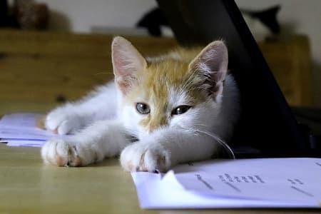 Soed kat på skrivebord