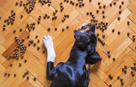 Hunde der spiser alt for hurtigt