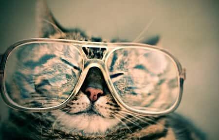 Facts om katte
