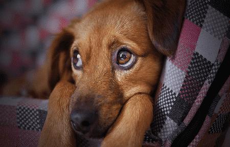 Hjælp hunde der tisser inde