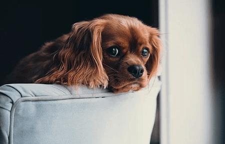 hjælp til hund der ikke er renlig