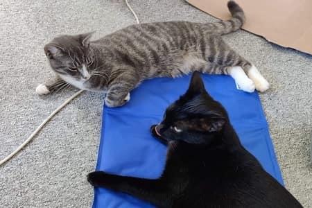 Kølemåtte katte
