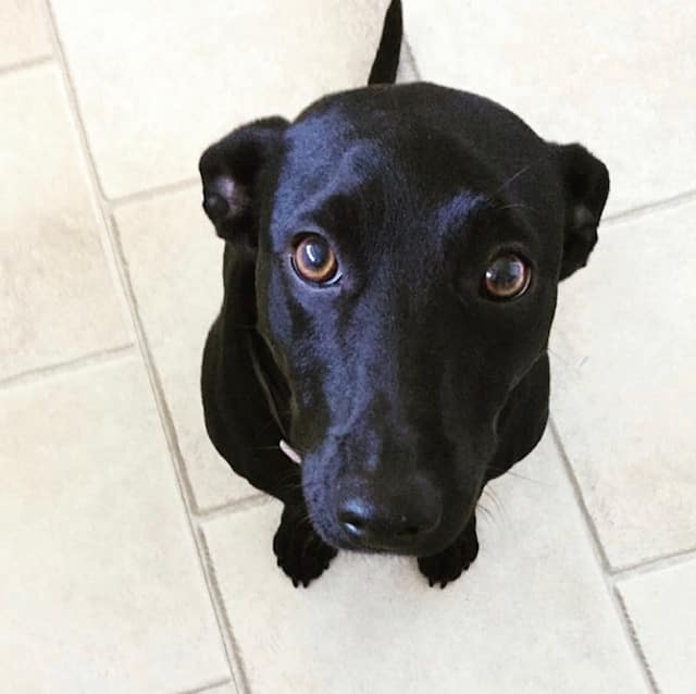 Historie om en hund med angst