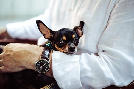 Hunde der lider af Separationsangst