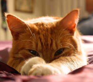 Katte sover meget