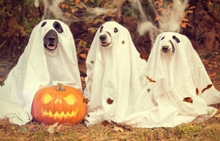 Hunde og Halloween