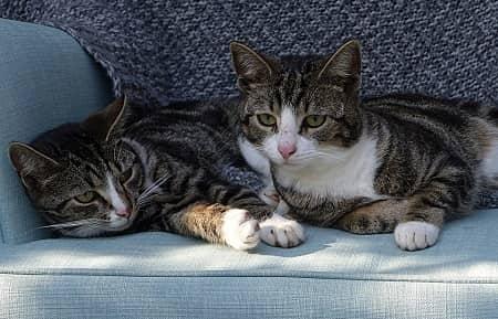 Kan katte dele kattebakke