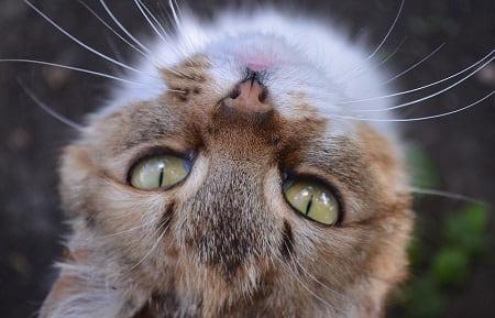 Kan katte genkende deres ejer?