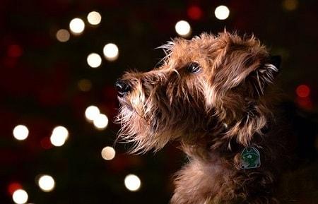 julegaver til hunde
