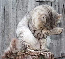 Katte der ikke er kælen