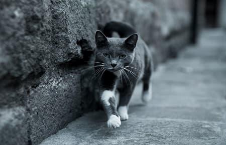 katte finder hjem