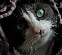 Kat der gemmer sig