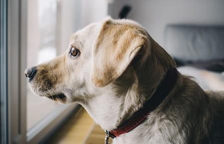 Hunde - alene hjemme