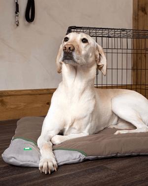 Måtte til hunde der fjerner flåter